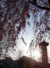 Sakura0702