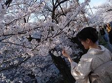 Sakura0703